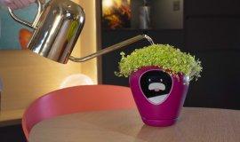 Imagem de Lua: Vaso de Plantas inteligente te alerta sobre as necessidades da sua Planta