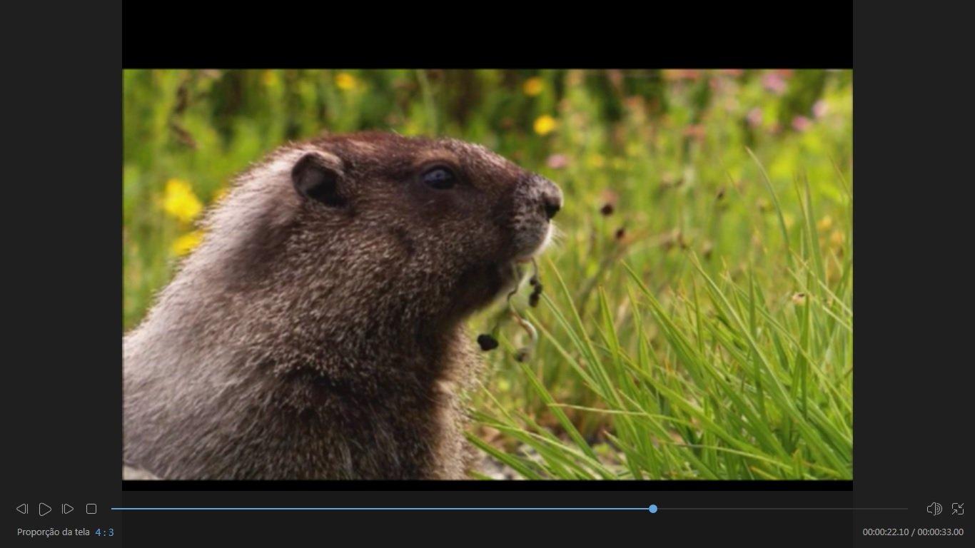 EaseUS Video Editor tela cheia